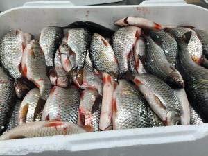 Opintomatka paikallisen kalan äärelle Kemiönsaareen