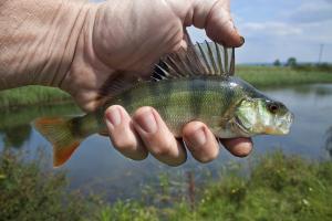 Kotimaisen kalan uusia liiketoimintamahdollisuuksia ja ilmastoystävällisiä innovaatioita @ VTT