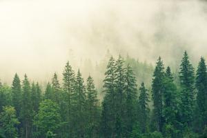 Valtakunnalliset Luonnontuotepäivät verkossa