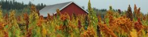 Kasvintuotannon paikallisista erikoisuuksista uutta virettä ruokamatkailuun -webinaari