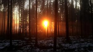 Varsinais-Suomen Älykkäät maaseudut -webinaari